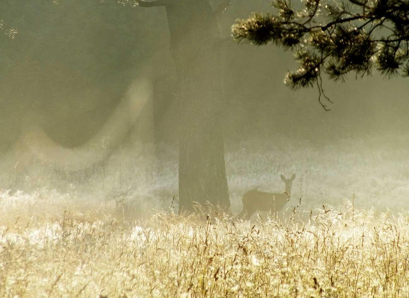 Pozorovanie divočiny