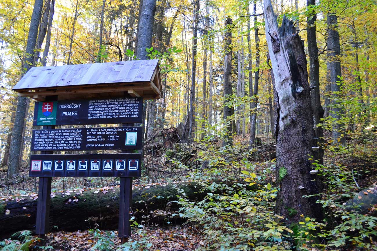 STEY _ Dobročský prales